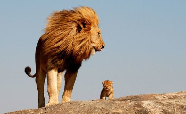 amor-paternal-animales-10