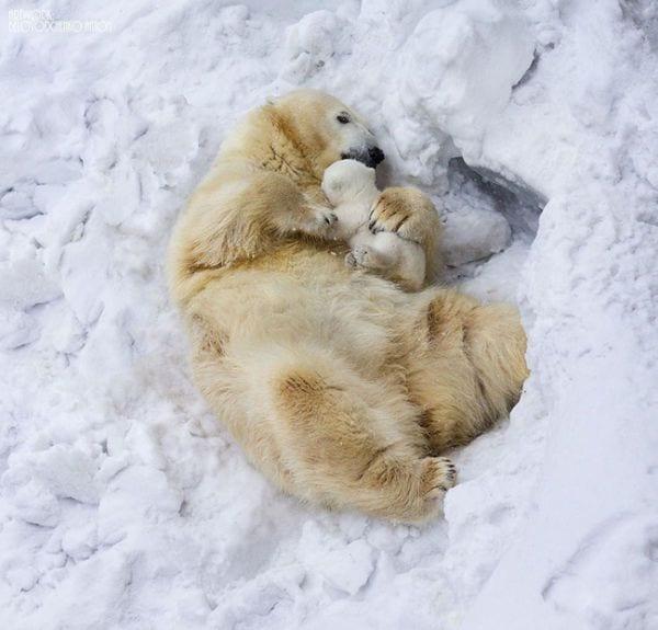 amor-paternal-animales-11