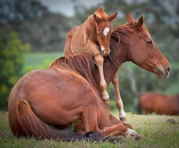 amor-paternal-animales-16