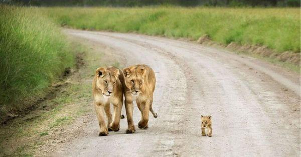 amor-paternal-animales-19