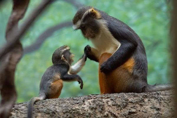 amor-paternal-animales-24