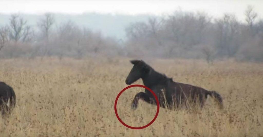 caballo rescate cadenas