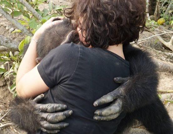 chimpance 02