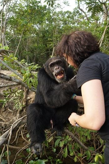chimpance-03