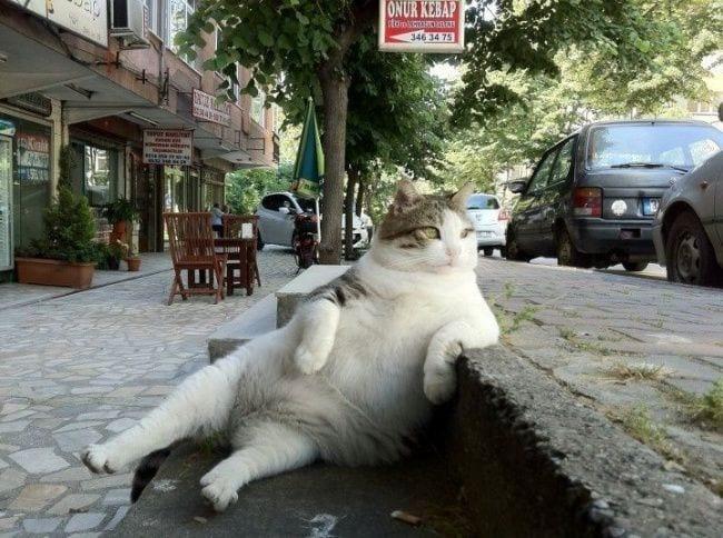 filosofia gatos 02
