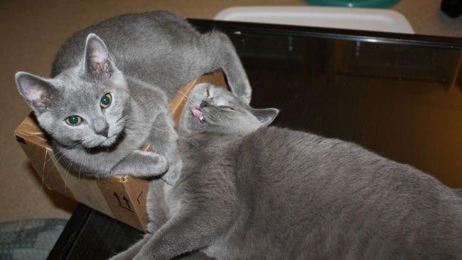 filosofia-gatos-14