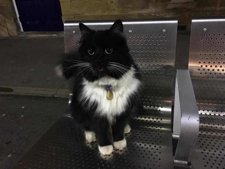 gato-trabajo-estacion1