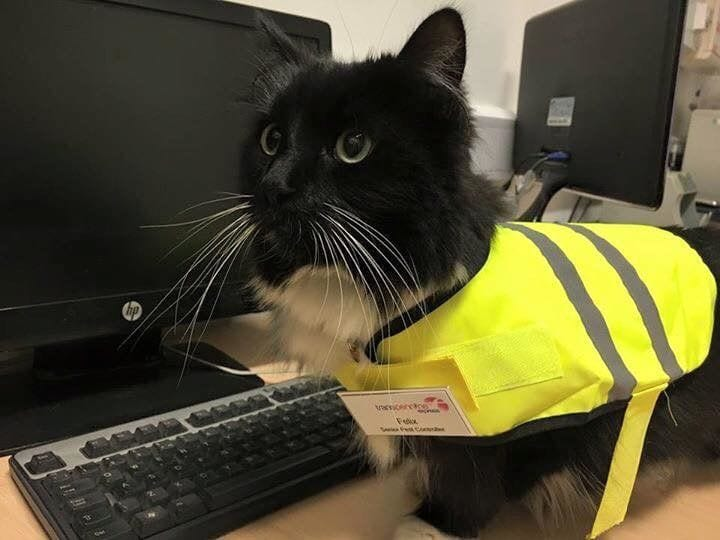 gatos empleos5