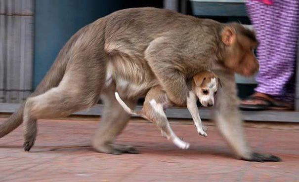 mono-adopta-perro-06