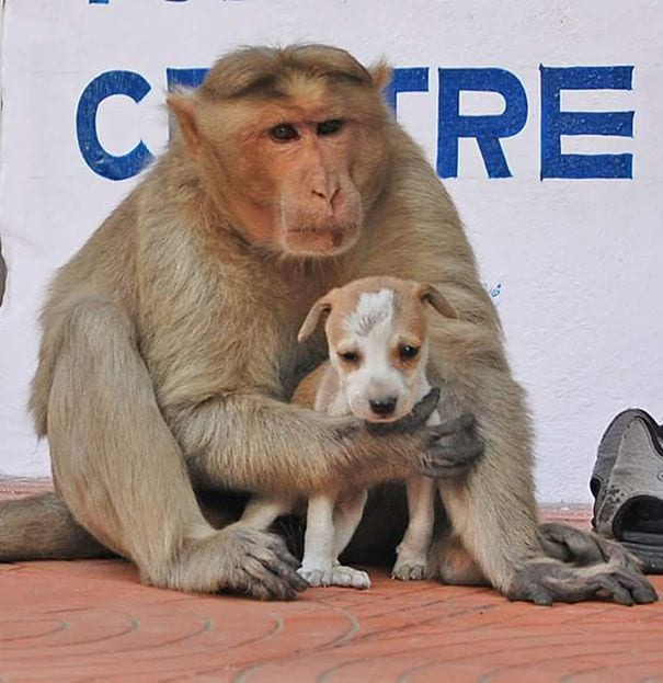 mono-adopta-perro-10