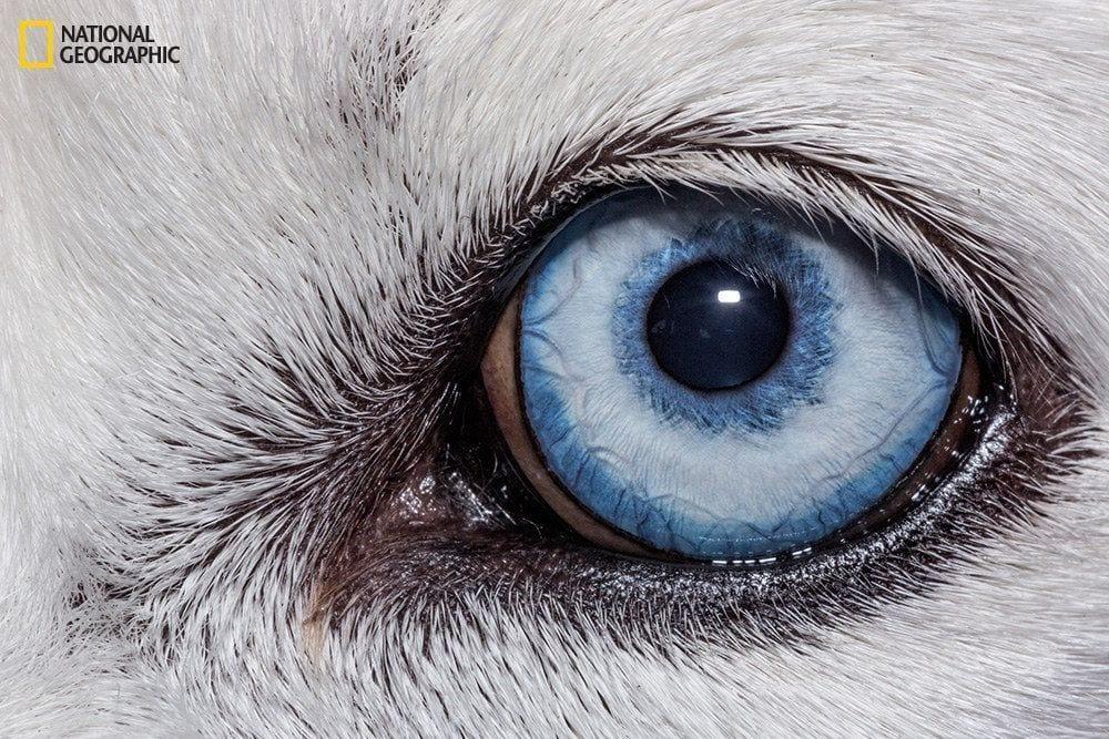 ojos-animales-01