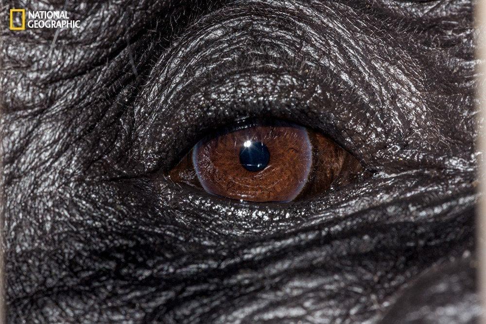 ojos-animales-03