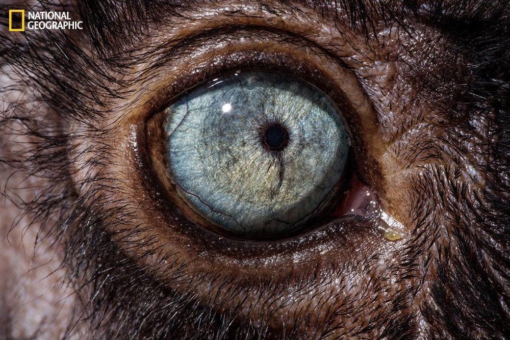 ojos-animales-05