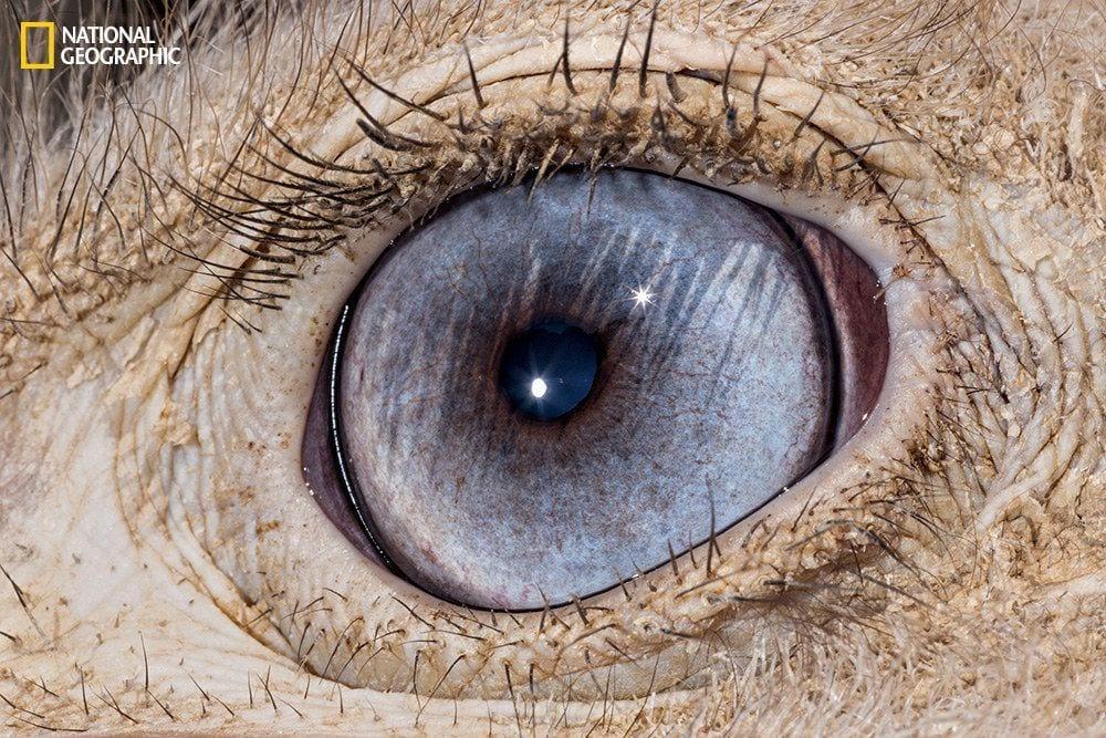 ojos-animales-06