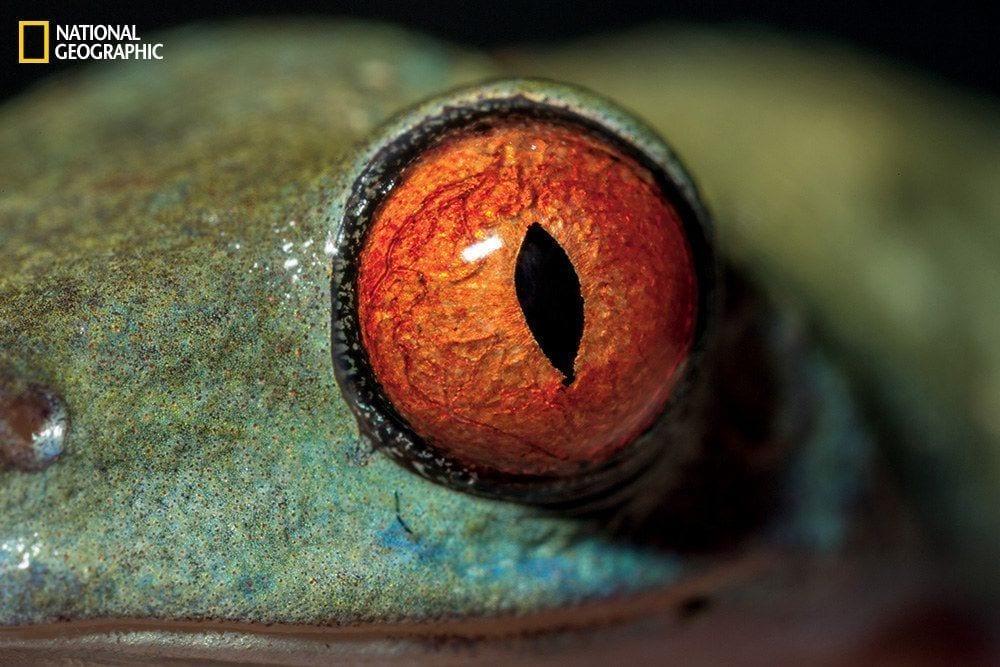 ojos-animales-07