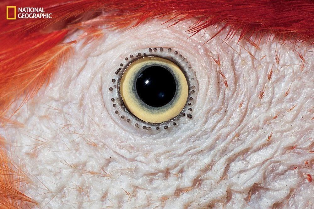 ojos-animales-08