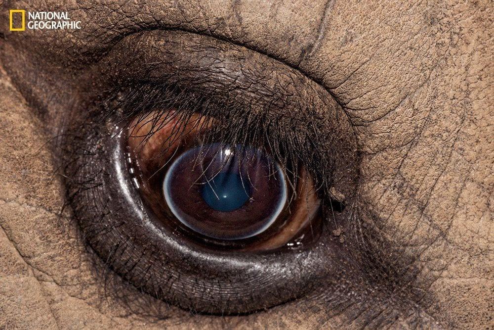 ojos-animales-09