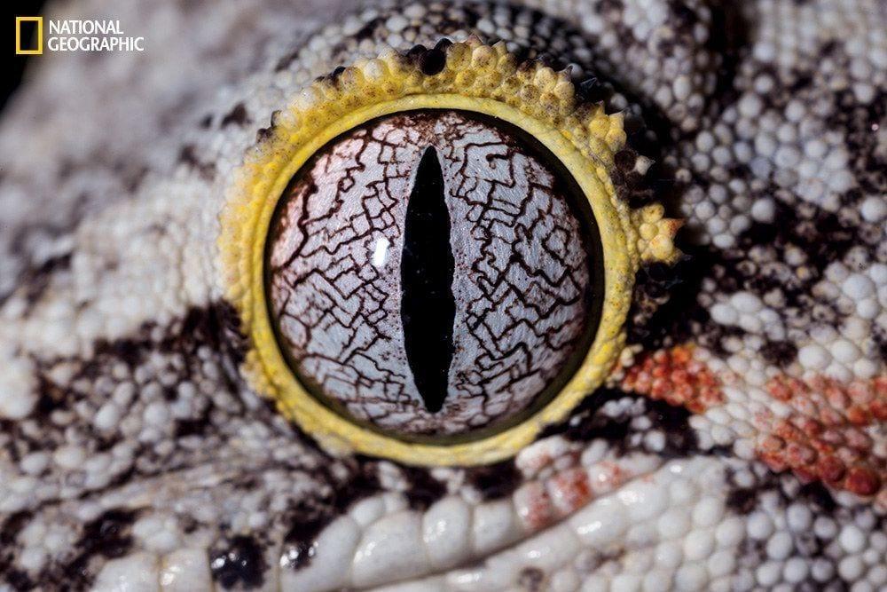 ojos-animales-10
