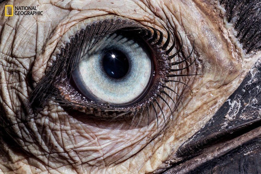 ojos-animales-11