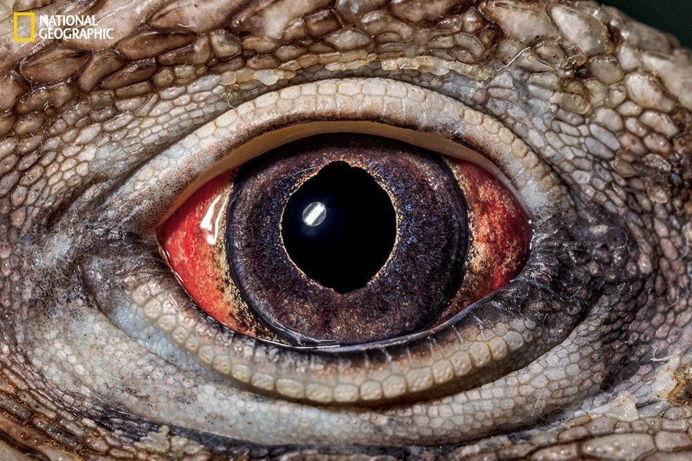 ojos-animales-12