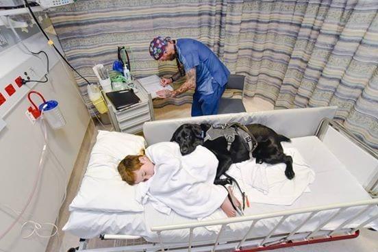 perro nino hospital 01