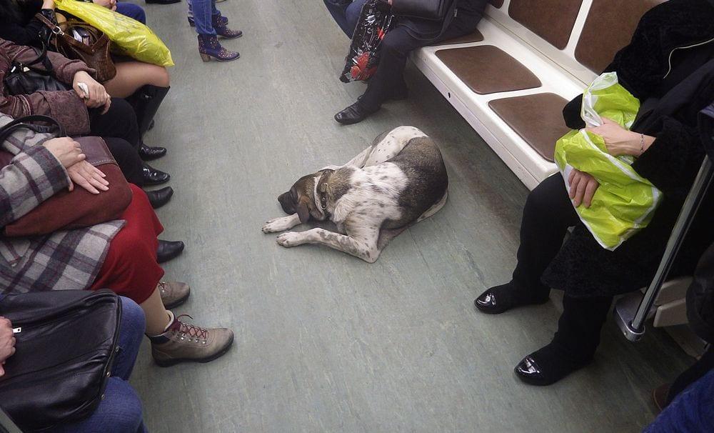 perros metro