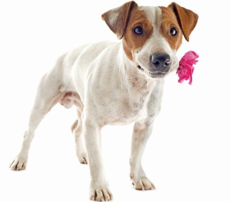 perros_que_quieren_decirnos_algo_1
