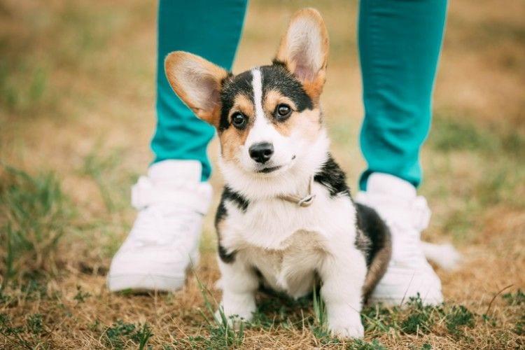 perros_que_quieren_decirnos_algo_7