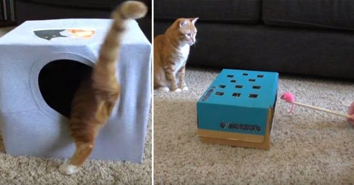 trucos entretener gatos 768x400