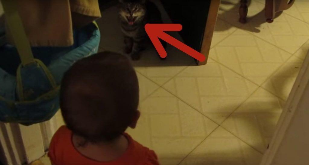 bebe gato conversacion destacada