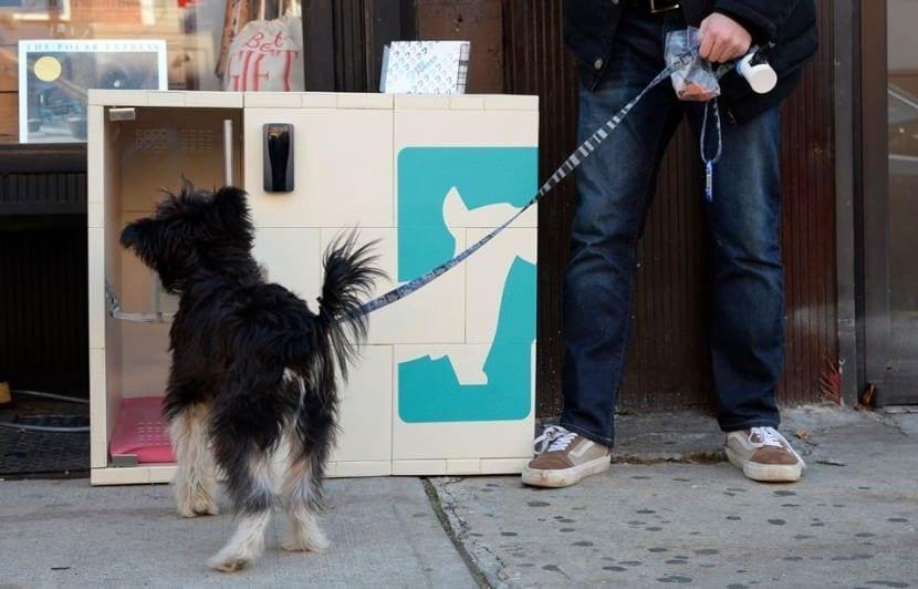 caja perros calle
