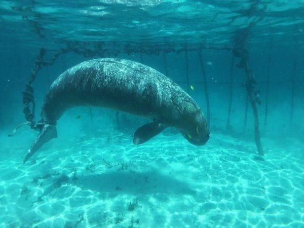dugongo-jaula01