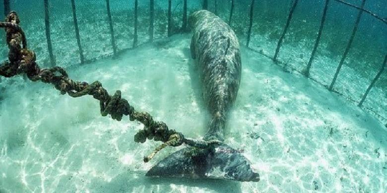 dugongo jaula02