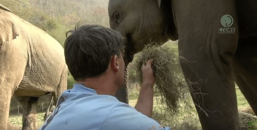 elefante-y-humano6
