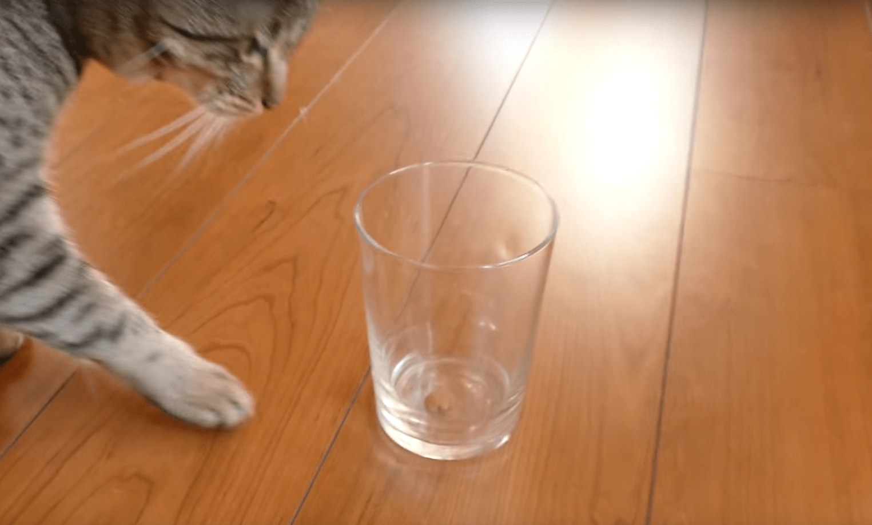 experimento-gatos-03