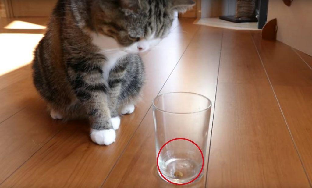 experimento gatos destacada