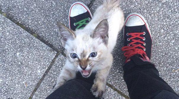 gato adoptado destacada