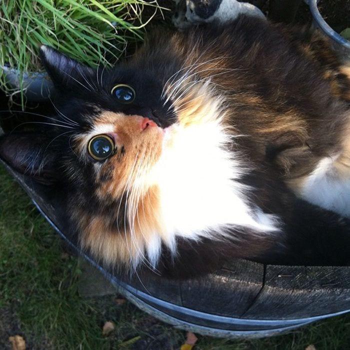 gato-ojos10