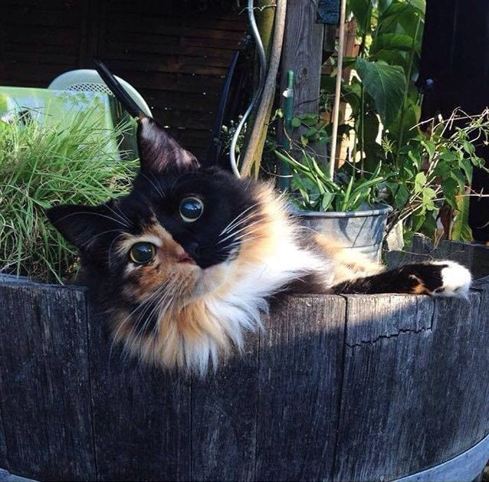 gato-ojos2