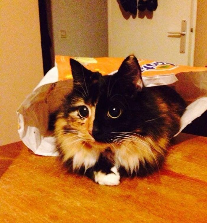 gato-ojos4