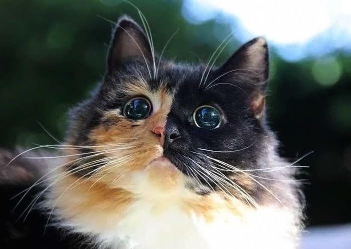 gato ojos5