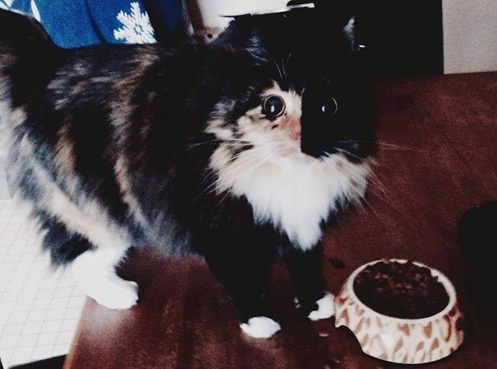 gato-ojos6