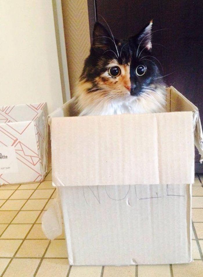gato-ojos7