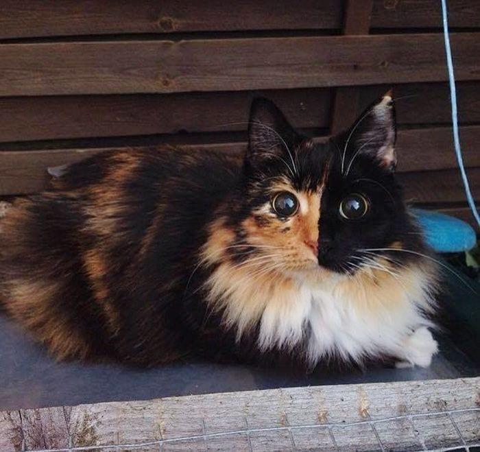 gato-ojos8