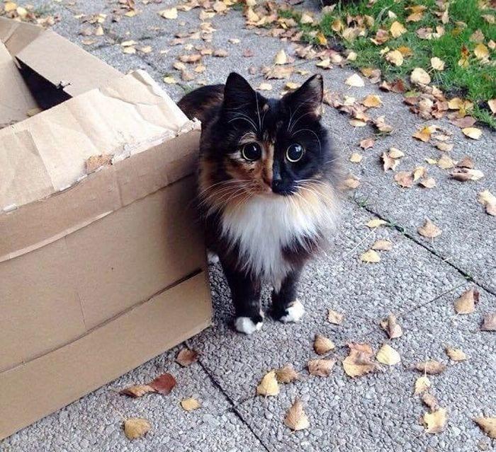 gato-ojos9