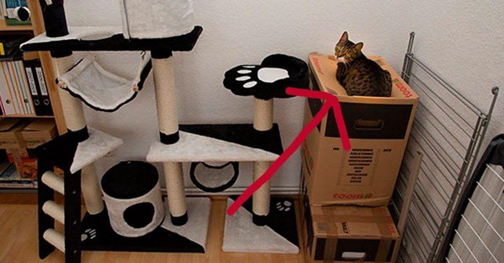 gatos regalos