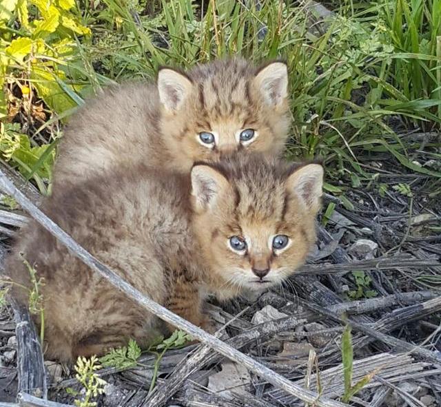 gatos-selva-01