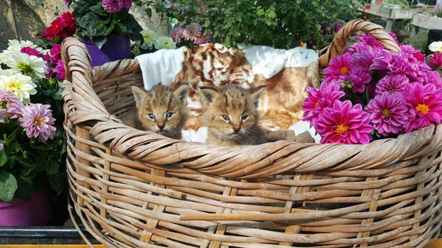 gatos-selva-04