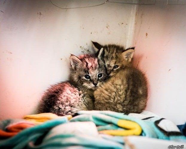 gatos-selva-11