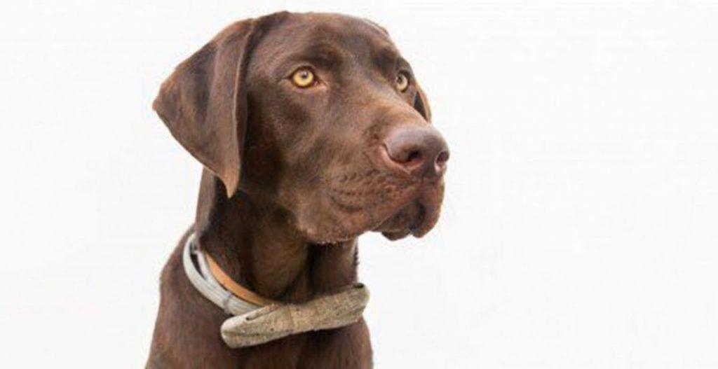 nanook el perro heroe que salvo a un hombre de morir ahogado